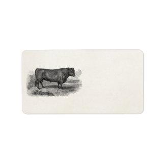 Tjurar för ko för illustration för adressetikett
