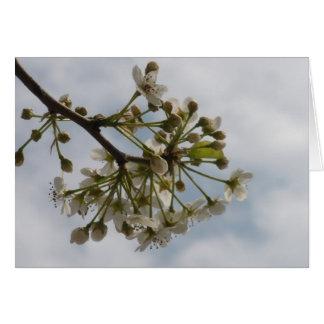 Tom insida - blommarhälsningkort hälsningskort