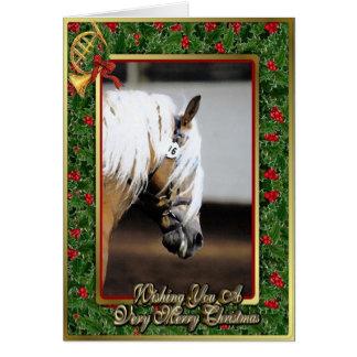 Tom julkort för Haflinger häst Hälsningskort