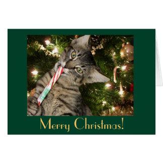 Tom julkort för kattcandy cane hälsningskort