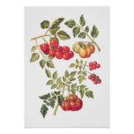 Tomater Print