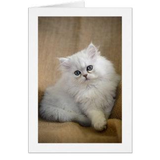 Tomt hälsningkort: Fluffig Chinchillakattunge Hälsningskort