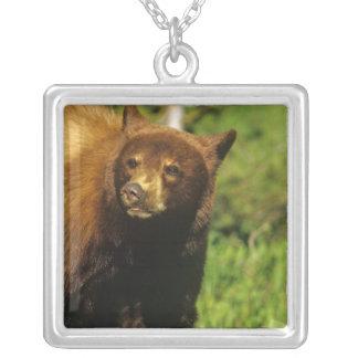 Tonåringsvartbjörn på Waterton sjöarmedborgare Silverpläterat Halsband