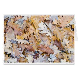 Top beskådar av ett lagrar av stupade oaklöv hälsningskort