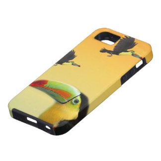 Toucan fåglar iPhone 5 cases