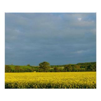 Träd i gult fält fototryck