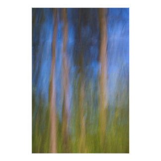 Träd i reflexion poster