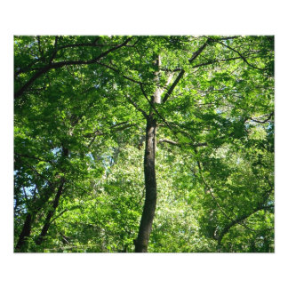 Träd i skogen fototryck