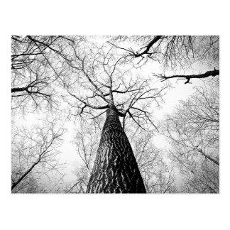Träd i svartvitt vykort