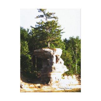 Träd på en sten canvastryck