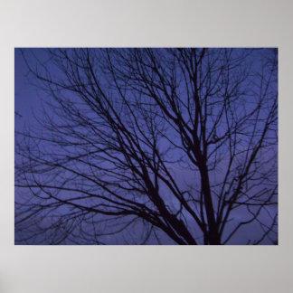 träd på skymningen poster