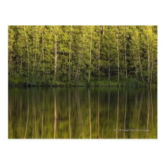 Träd reflekterade i vatten vykort