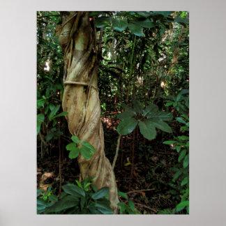 Träd som kvävas av scheffleraen poster