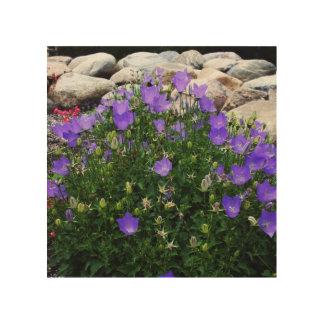Trädgård för Canterbury Klockor blåklockasten Trätavla