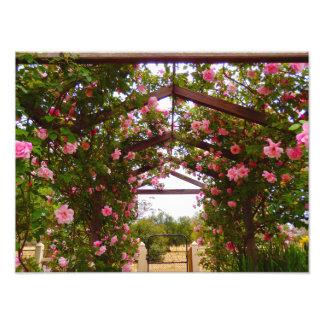 Trädgårds- tillträde fototryck