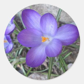 Trädgårds- växt för blommarkrokus runt klistermärke