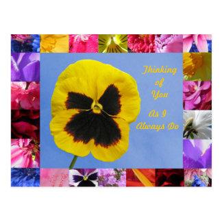 Trädgårds- vykort för Pansy