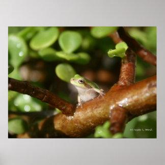 Trädgrodaredo som fjädrar ut ur bonsaiträd affisch