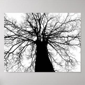 TrädSilhouette i svartvit affisch
