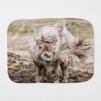 Trasa för rapning för Shetland ponnyhingst