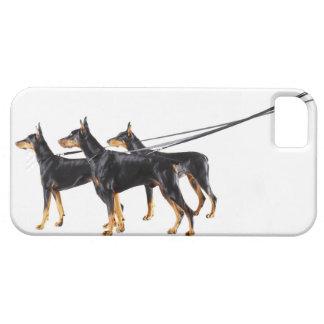 Tre Dobermans på koppel iPhone 5 Cover