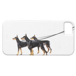 Tre Dobermans på koppel iPhone 5 Hud