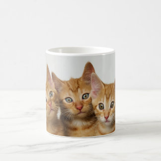 Tre gulliga ljust rödbrun kattungar sid - by - kaffemugg