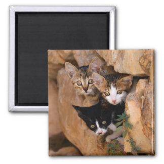 Tre gulliga nyfikna kattungar magnet