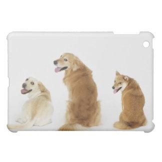 Tre hundar tittar kamera iPad mini mobil fodral