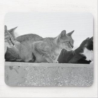 Tre katter musmatta