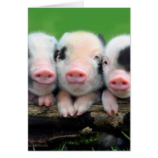 Tre lite grisar - gullig gris - tre grisar OBS kort