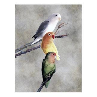 Tre nätt Lovebirds Vykort