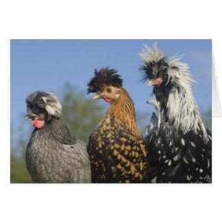 Tre skraj polska hönor - roliga fåglar hälsningskort