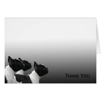 Tre svartvita franska bulldoggar OBS kort