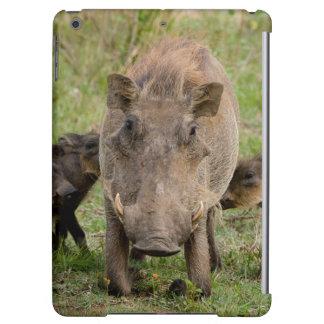 Tre Warthog Piglets diar på deras mor