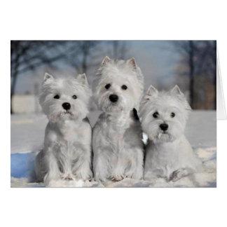 Tre Westies i snön Hälsningskort