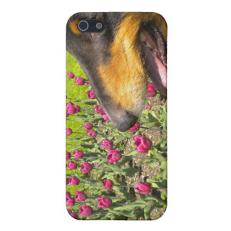 Tri Collie N fodral för tulpan iPhone4 iPhone 5 Cases