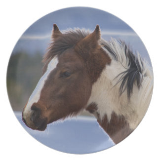 Tri-Färgad häst Tallrik