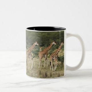 Trio av Rothschilds giraff, sjö Nakuru Två-Tonad Mugg