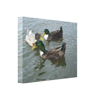Triogräsandet duckar kanfassjalen canvastryck
