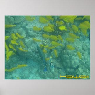 Tropisk affisch för hawaiansk fisk
