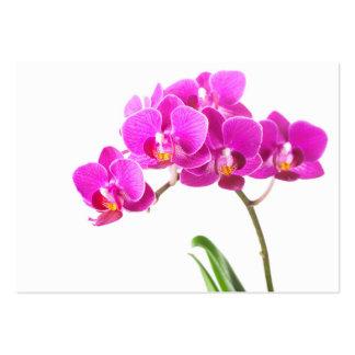 Tropisk blomma för rosa purpurfärgad set av breda visitkort