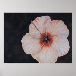 Tropisk blomma för smörgulthibiskus affisch