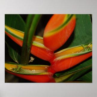 Tropisk blommaaffisch posters