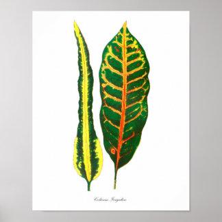 Tropisk botanisk hem- dekor för konsttryck #10 poster