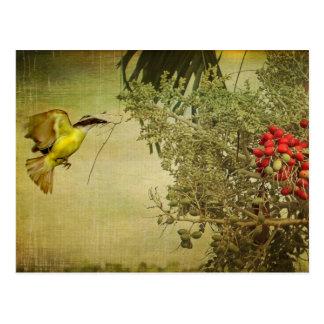 Tropisk fågel som bygga bo i julpalmträd vykort