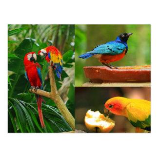 Tropisk fågelvykort vykort