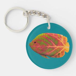 Tropisk fisk 1 för asp- löv