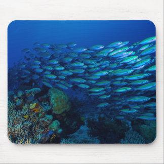 Tropisk fisk av korallhavet Mousepad Musmatta