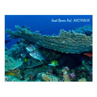 Tropisk fisk av korallhavsvykortet vykort